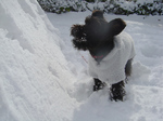 200512__snowcookie3.jpg